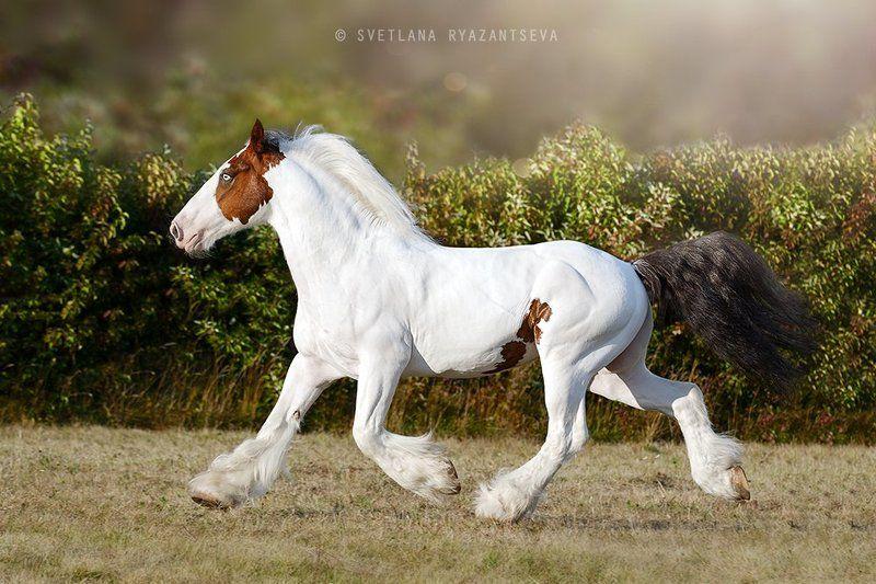 horse, run, trot, motion, лошадь, лошади, в движении летящей походкойphoto preview