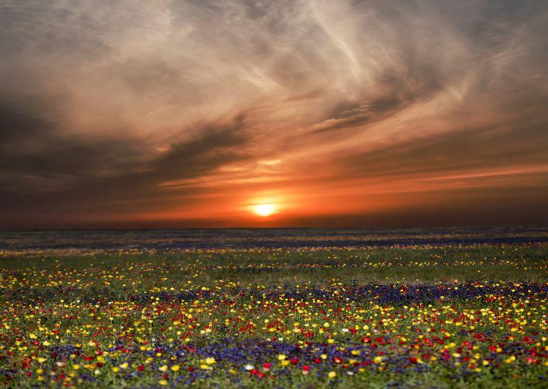 крым,тюльпаны,поле,закат,облака,солнце,природа,разноцветный,желтый,цветы,красный,синий,россия,опук,заповедник,россия,пейзаж Закат в тюпановом полеphoto preview