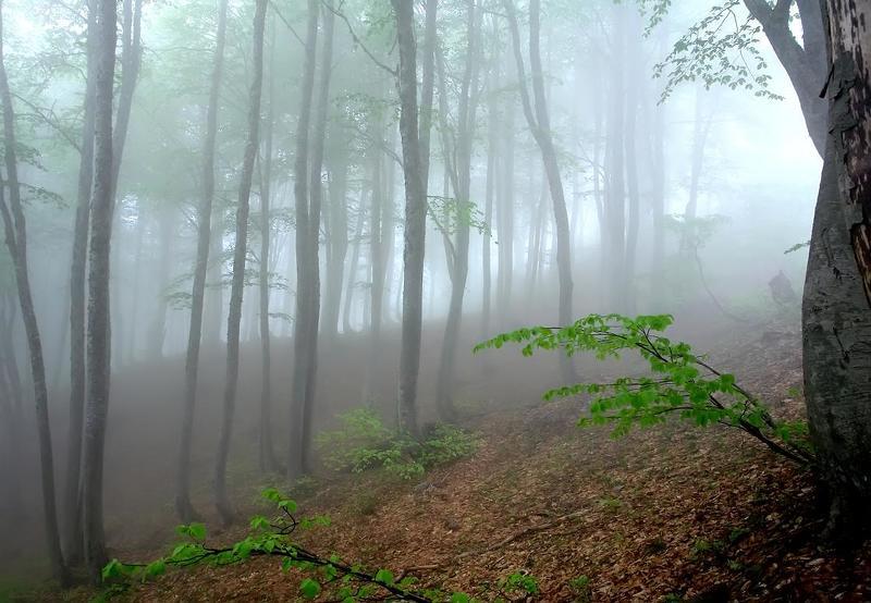 туман, горы, лес ОН ПРИШЕЛ.....photo preview