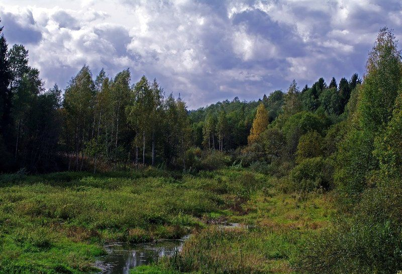 осень, лес, маленькая речка Осенняя зарисовкаphoto preview