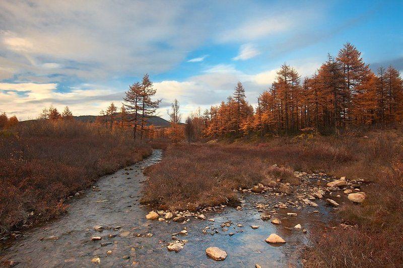 ...одела осень медью лес под сводом голубых небесphoto preview