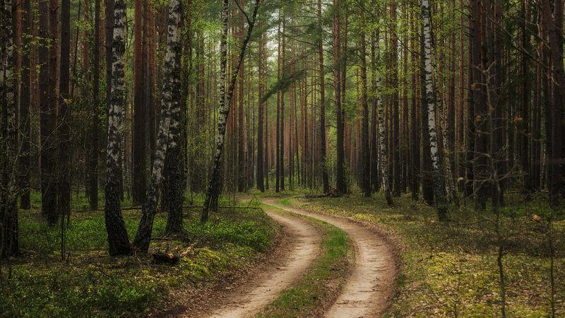 лес, весна, первая зелень Весенний лесphoto preview