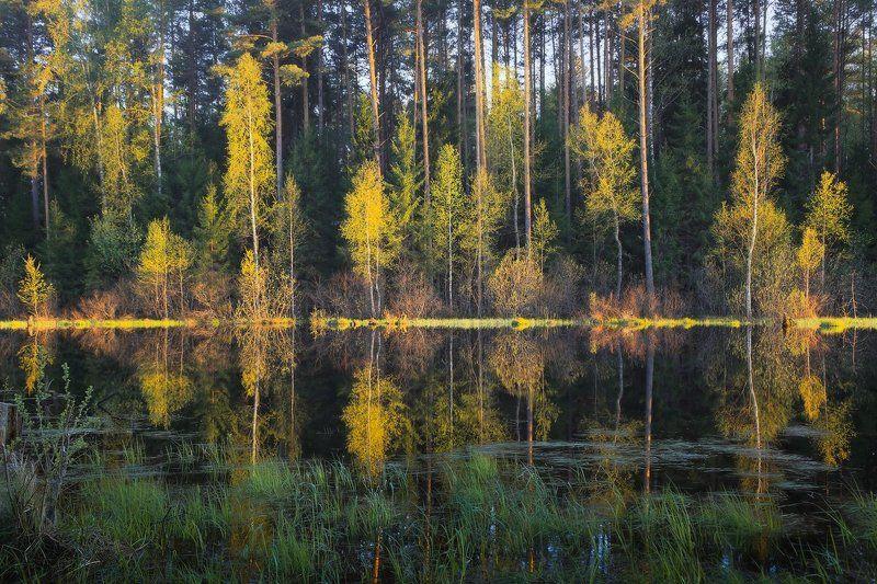 весна разлив вечер свет Весенний калейдоскопphoto preview