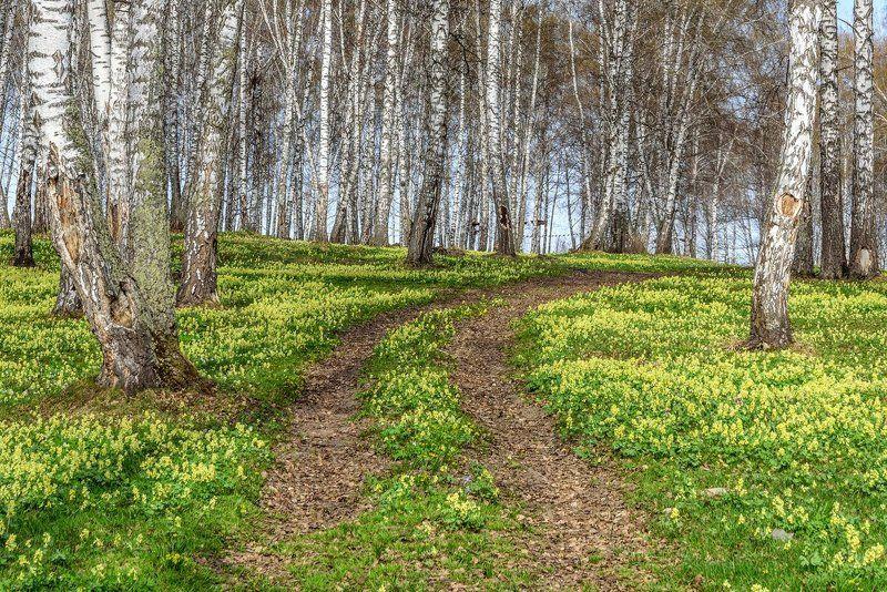 цветы, весна, алтай, flowers, spring, altai Весеннее ассортиphoto preview