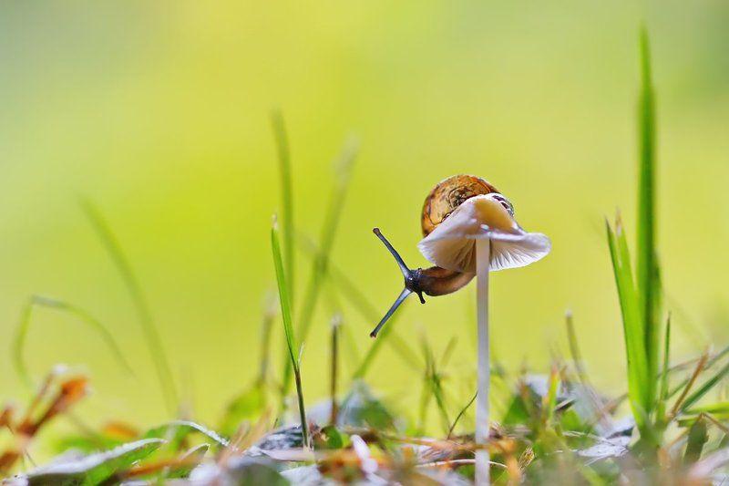 улитка, гриб, макро, природа На тонкой ножкеphoto preview