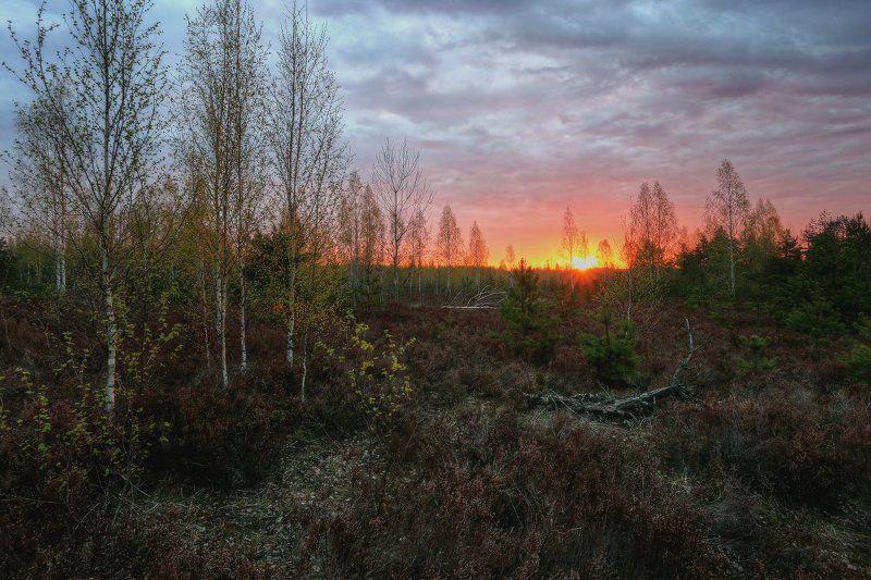 рассвет,утро Майский рассветphoto preview