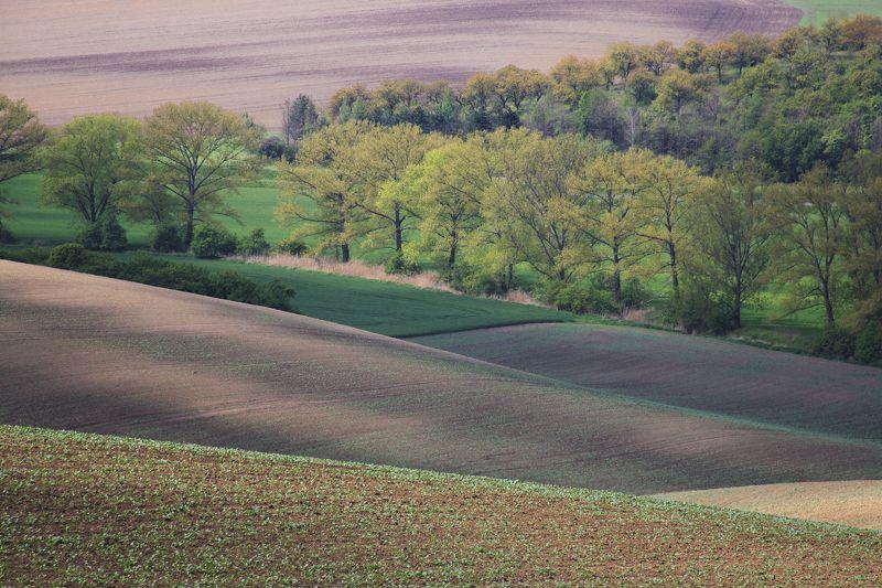 поля весна чехия Цвета и волны моравииphoto preview