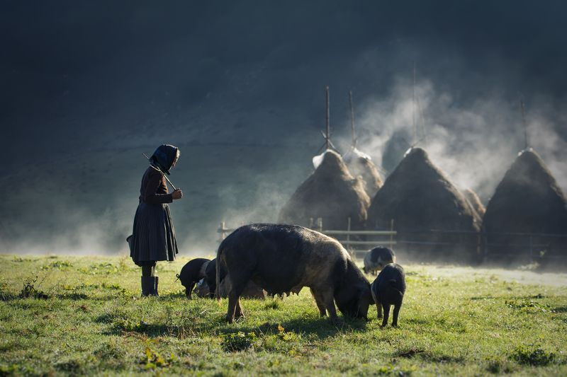 rural, idyll, landscape, village, mountain, river, sunrise, light, spring, pigs Storyphoto preview
