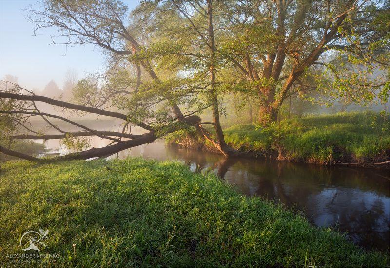 утро, май, весна, туман, река, дерево, трава Майское Утроphoto preview