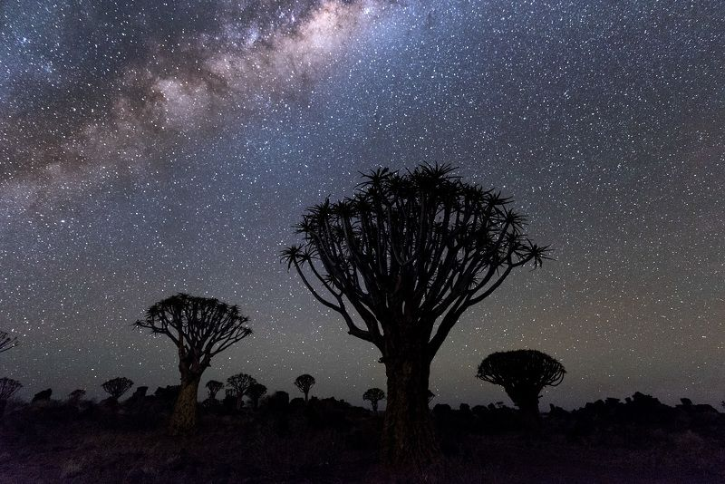 Quivertree Forest Park, Namibia, Nature, Star - Space, Night, Milky Way, Astronomy, Sky, Tree, Landscape, Galaxy, Space, Blue, Dark, Nebula, Scenics, Planet - Space, Africa, Black Color, Beauty In Nature, Science, Constellation, Outdoors Quivertree Forest Parkphoto preview