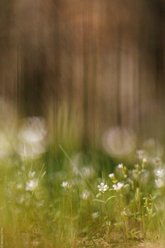На лесной полянкеphoto preview
