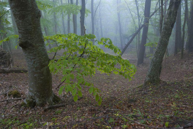 Майский лес.photo preview