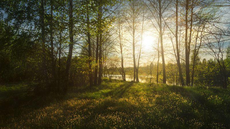 поляна, трава, деревья, солнце, весна В мае у старого руслаphoto preview