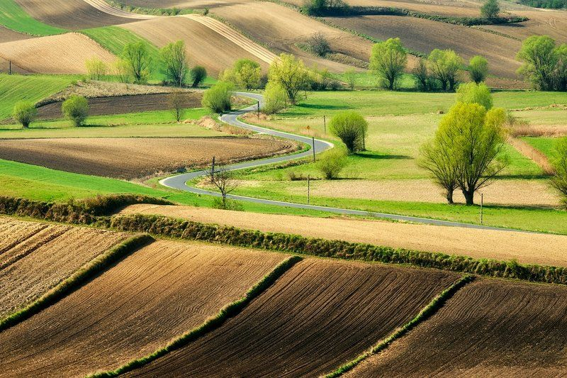 spring, willows, landscapes Winding roadphoto preview