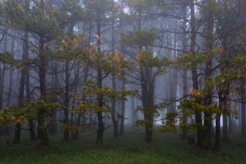 туман ,лес Туман в лесу ...photo preview