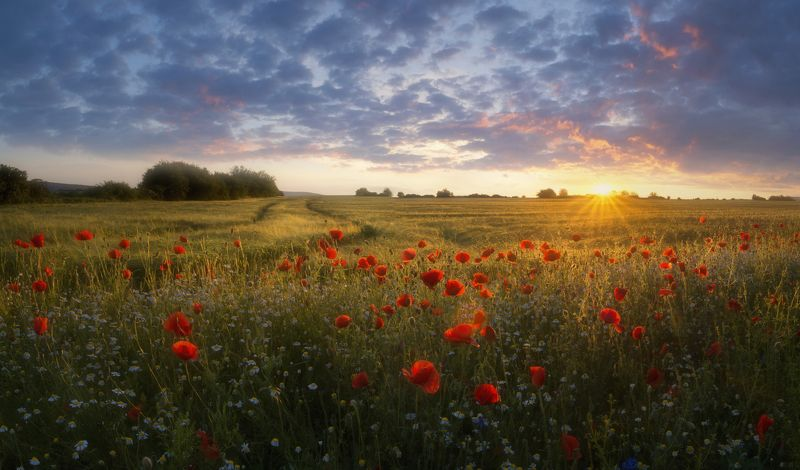 landscape,poppies,пейзаж,природа,nature,flowers,colors,red,fields,sunlight,clouds Poppies sunset.photo preview
