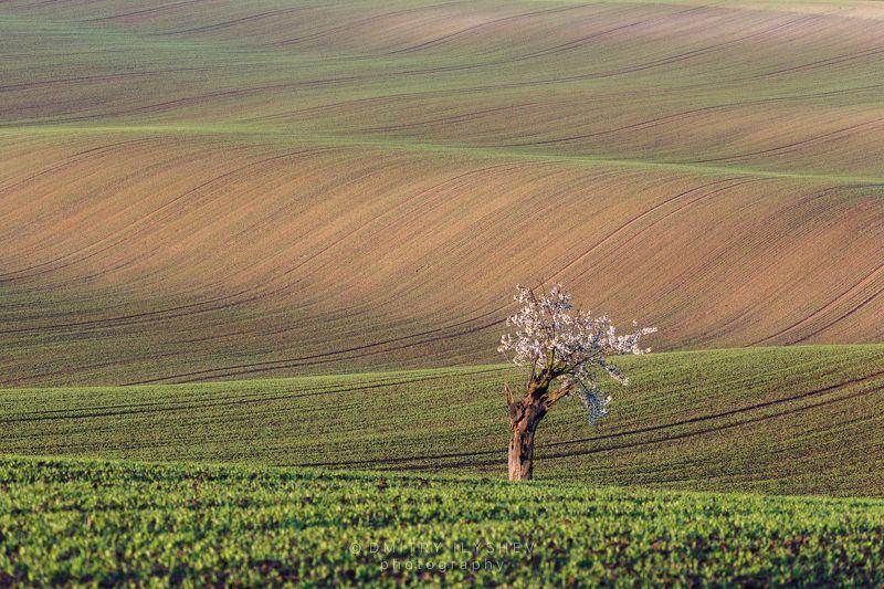 моравия, чехия, пейзаж, европа, утро, рассвет, поля, южная моравия, фототур Моравская безмятежностьphoto preview