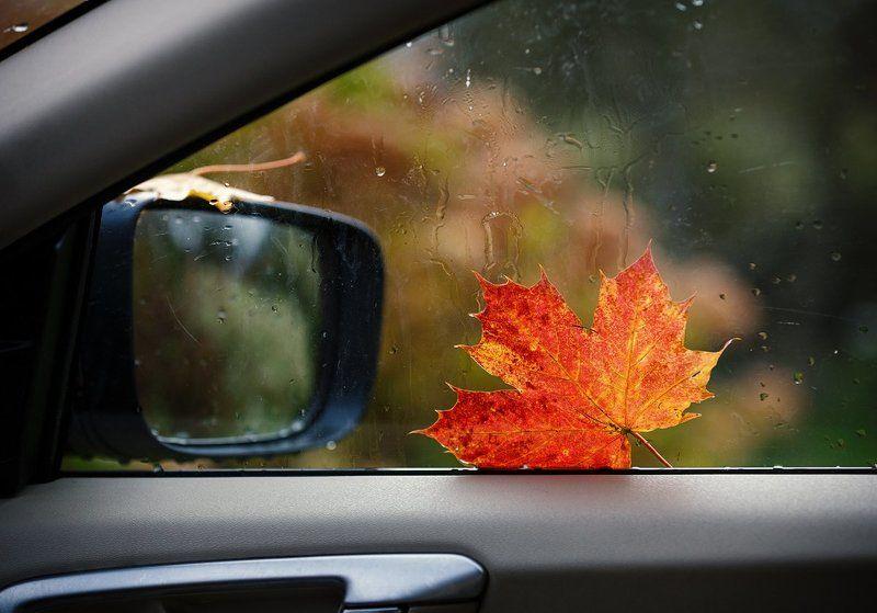 Осень. За окном осень.photo preview