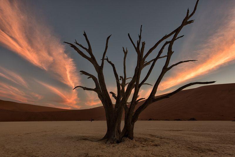 пустыня, песчаные люны, песок, Соссусвлей, Sossusvlei, пустыня Намиб, Намибия, пейзаж, Африка, небо, закат, облака, засуха, безлюдье красота природы, одиночество Послесловие к закатуphoto preview