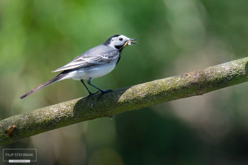 Wagtail\'s Breakfast photo preview