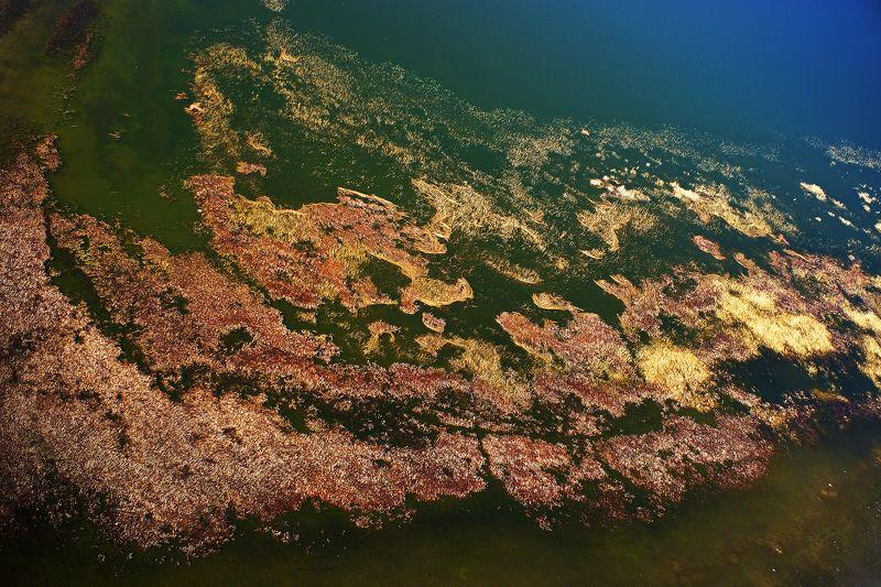 озеро, камыш, аэро, дрон, коптер, aerial \