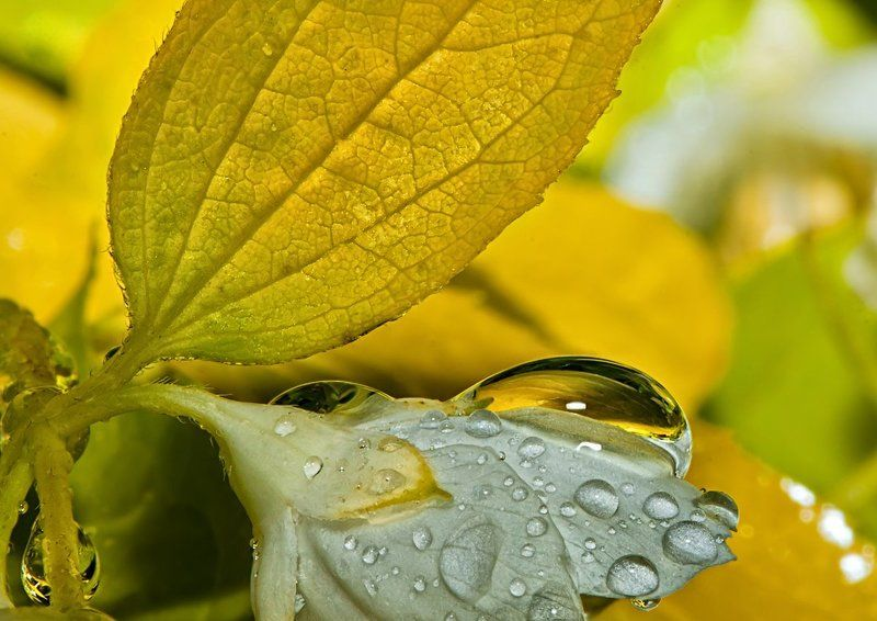 макро; капля; После дождя...photo preview