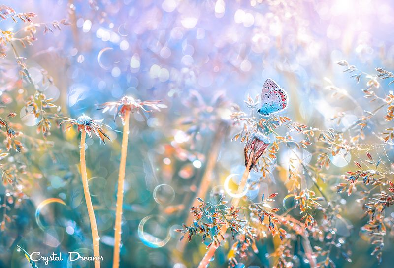 crystal dreams, macro, spring, color, art, nature, butterfly \