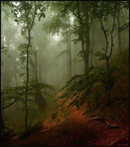 Майские туманы на Демирджи