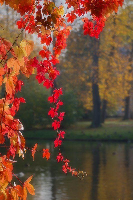 Осень Немного осени.photo preview