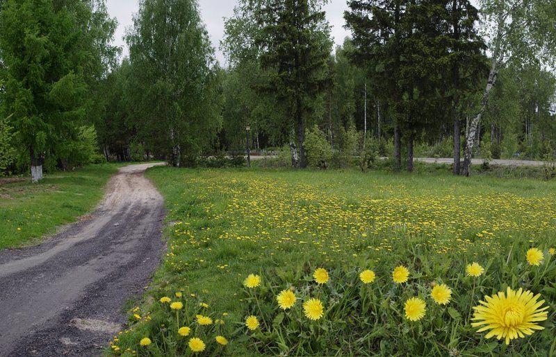 деревня,дорога,одуванчики,луг, Деревенская дорожкаphoto preview