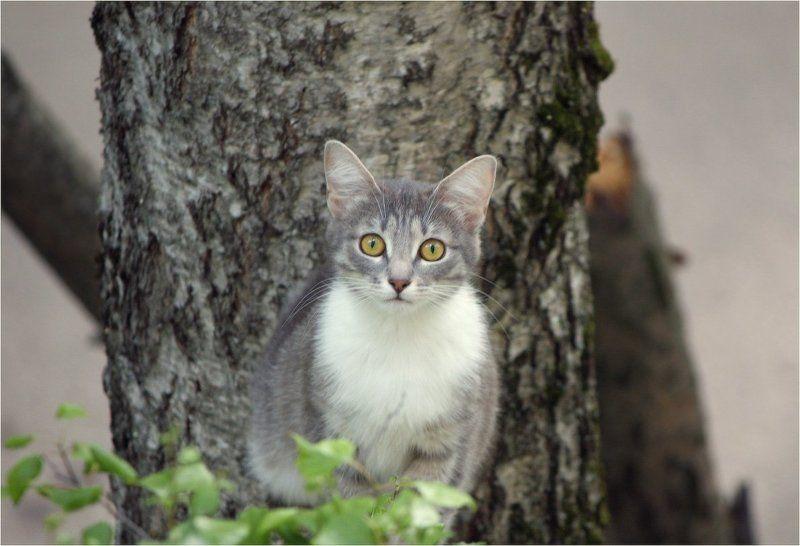 котенок Древолазphoto preview