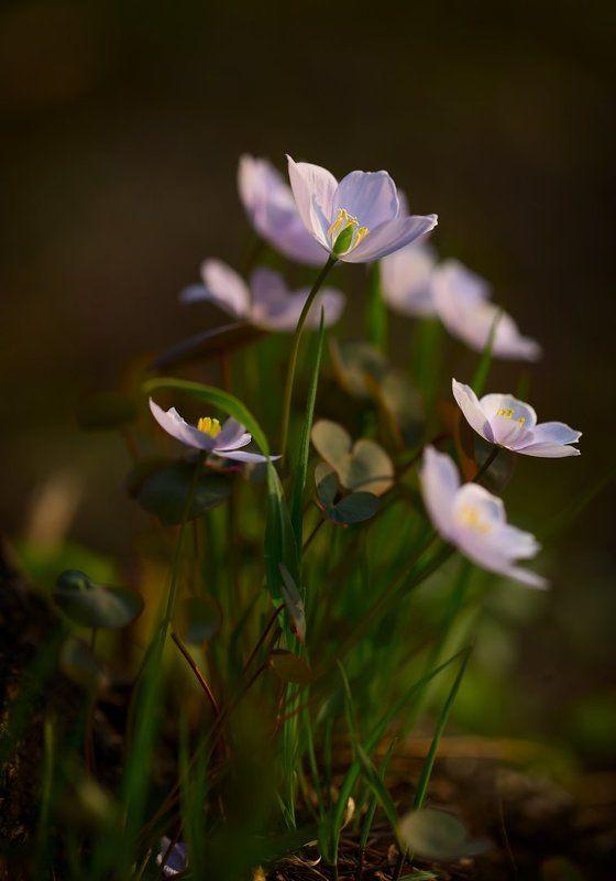 цветы, весна, весенниеphoto preview