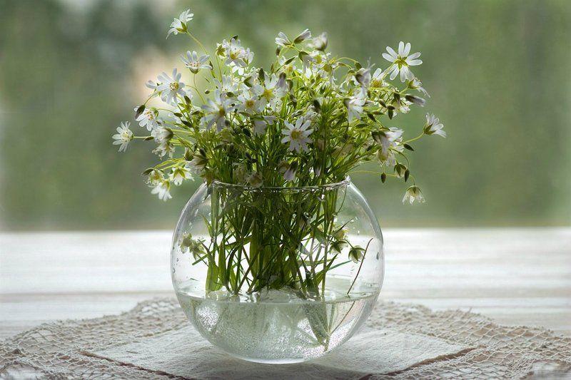 цветы, полевые цветы, ромашки, цветы, ваза, стеклянная ваза, окно, натюрморт, летний натюрморт, льняная салфетка Полевые цветы в стеклянной вазе на окне.photo preview