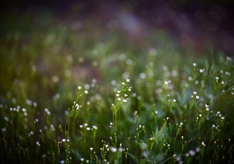 весна, макро, полевые цветы весенняя феерияphoto preview