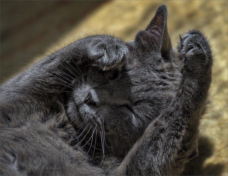 лето, жара, кошки Летоphoto preview