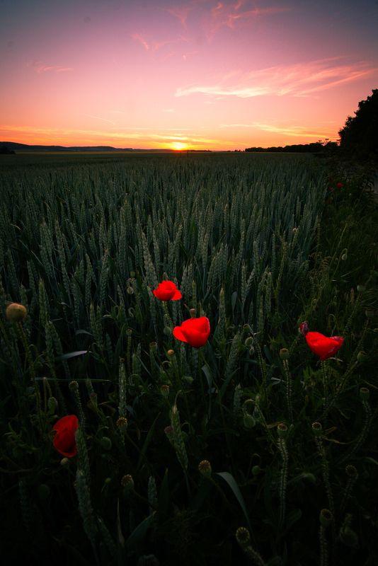 Sunset fieldsphoto preview