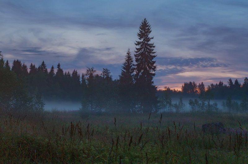 болото, ночь, питер, пейзаж Ночь идёт. . .photo preview