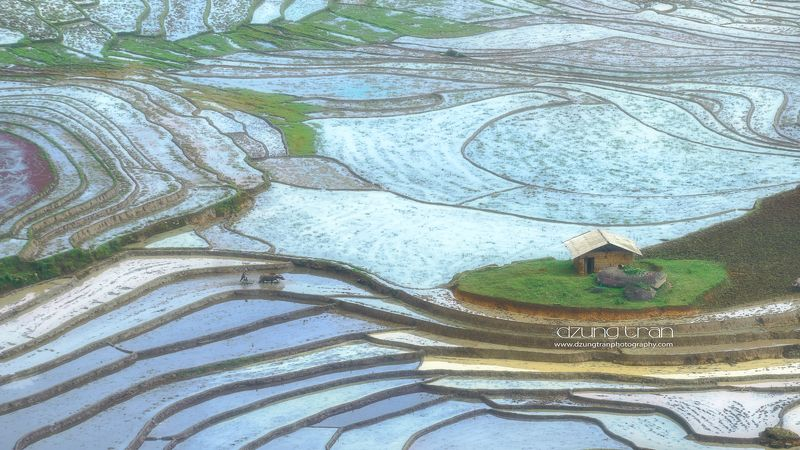 y ty,rice,fields,water,season,farmer Rice fields water painting in Y Typhoto preview