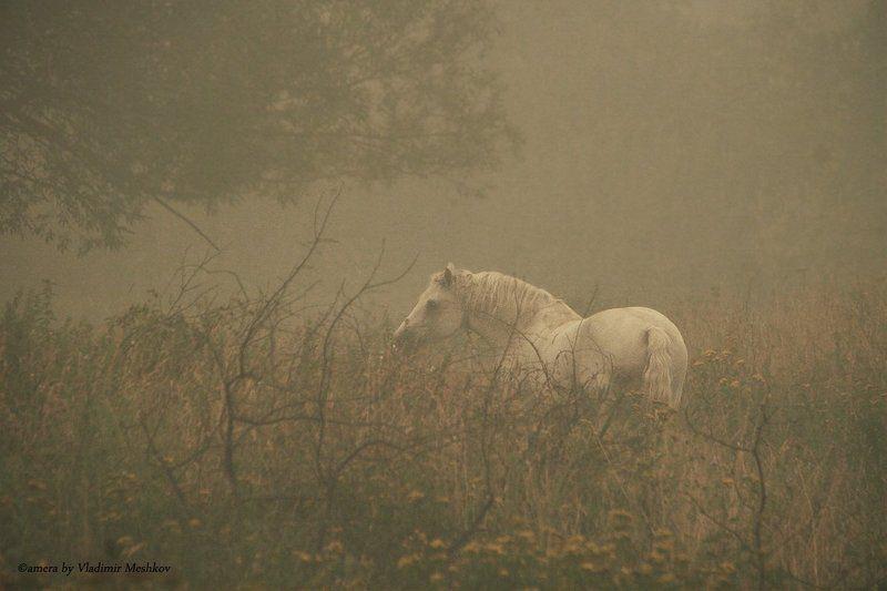 Лошадь ждет ёжика в тумане.......photo preview