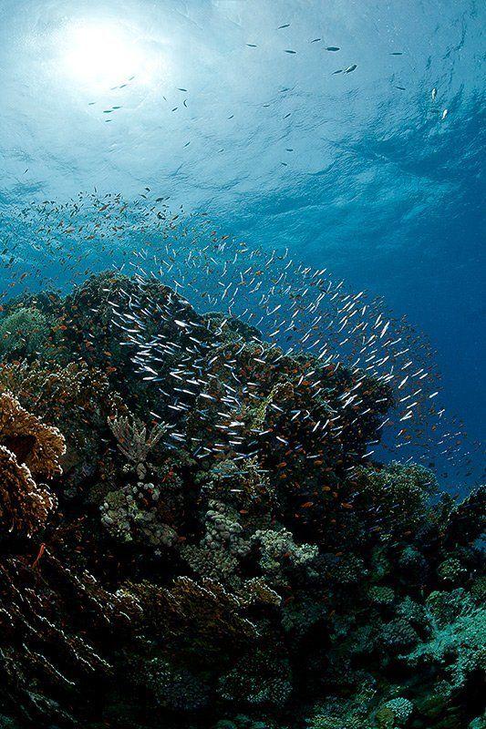 красное море, подводная съемка, риф, коралл, солнце на тысячу осколковphoto preview