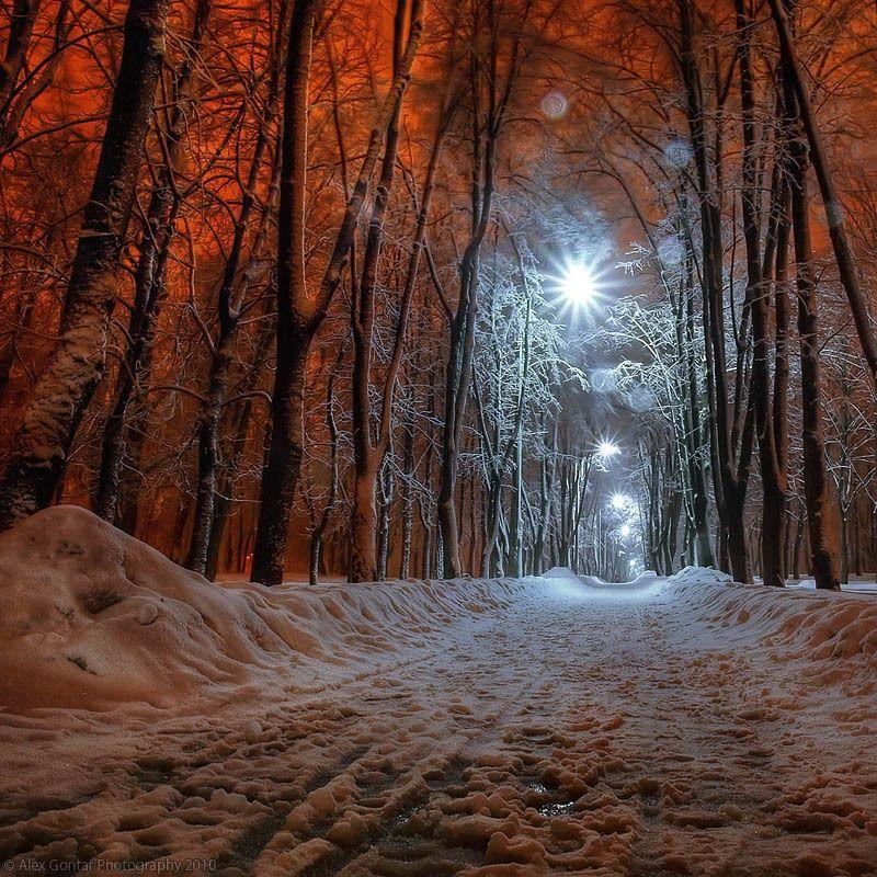alex gontar, darkness, dusk, fiery-fish, kiev, lantern, night, olympus, park, public garden, red, snow, square, the capital, the winter, trees, ukraine Nightly Kiev. 219854photo preview