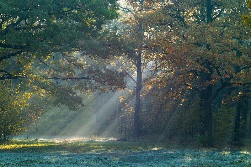 солнечный свет...photo preview