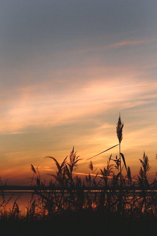 закат, природа, небо, трава, плещеево озеро Траваphoto preview