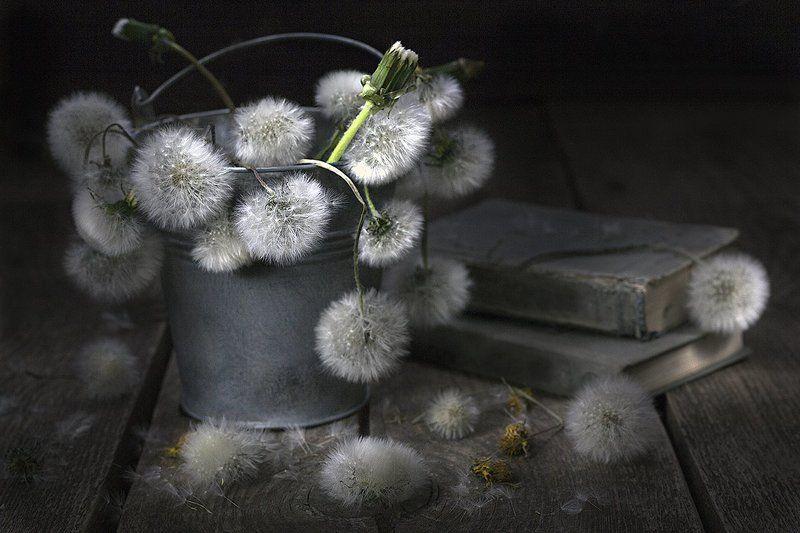 одуванчики, цветение, старые цветы, цветы, ведерко, деревянный стол, старые книги, винтаж, ретро, натюрморт Старые одуванчики в ведерке.photo preview