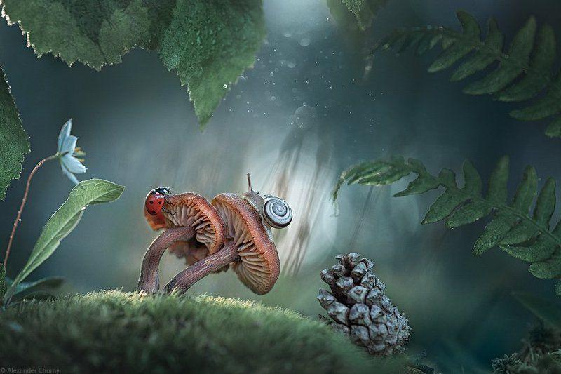 oleksandr chornyi, украина, коростышев, весна, лес, красота, макро, макро мир, природа, макро-красота, макро цветы, цветы, макросьемка, грибы, мох, сказка, чорный, ***photo preview