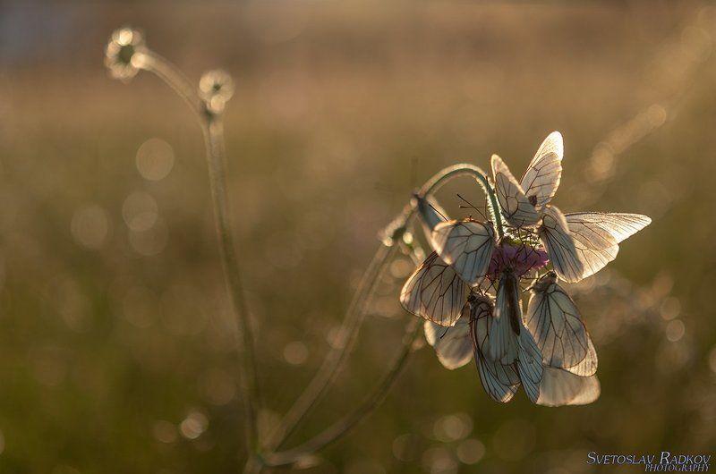 Овощни пеперуди на Залезphoto preview