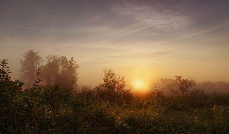 утро, рассвет, туман, солнце, свет Туманный рассветphoto preview