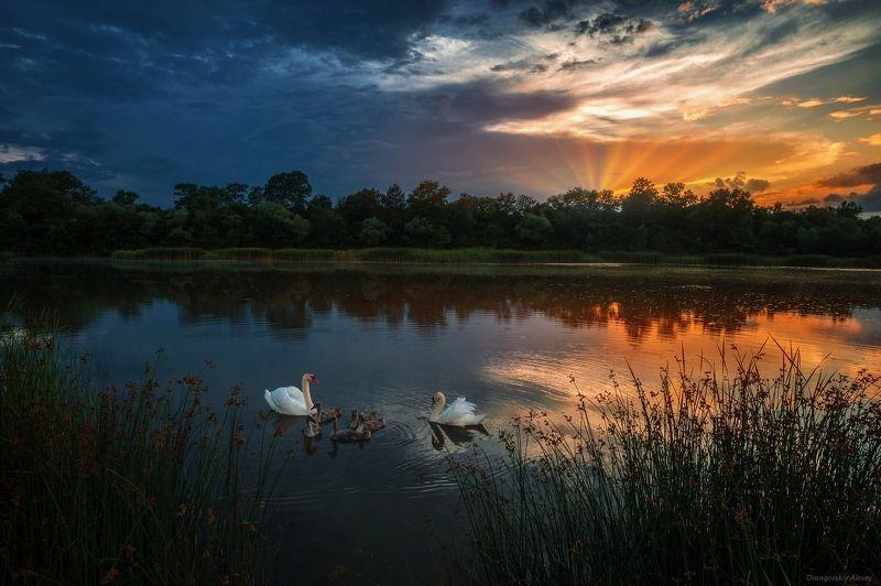 Лебеди на озереphoto preview