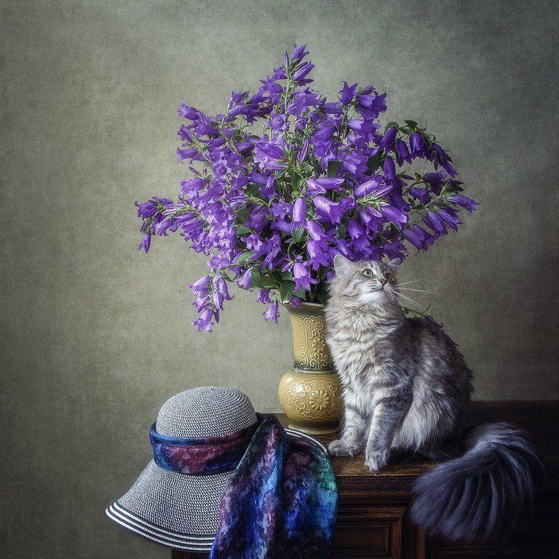 фото животных, домашние животные, питомцы, кошки, кошка Масяня, букет колокольчиков, шляпка Страдания по шляпкеphoto preview