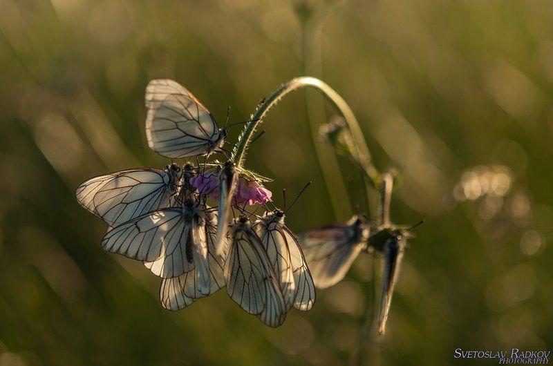 Пеперуди в тревата късен следобядphoto preview